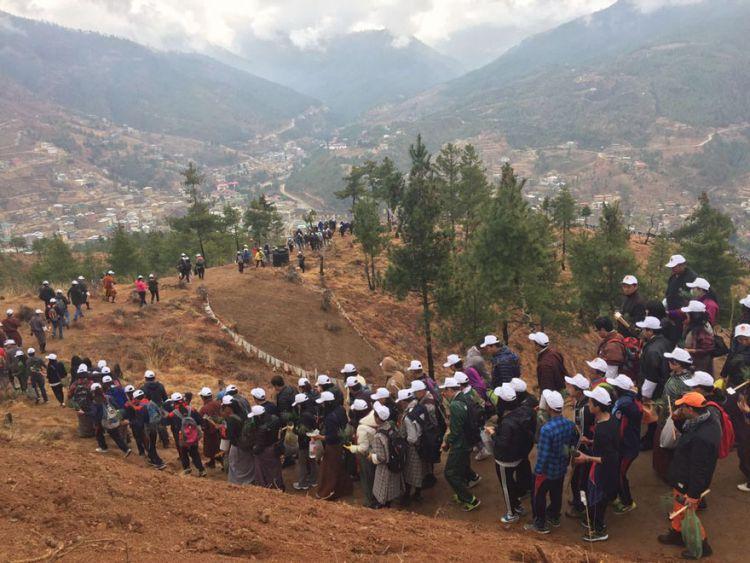 108 тысяч деревьев высадили в честь рождения принца