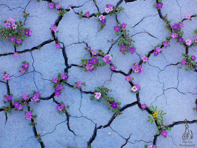 Цветущая пустыня в штате Юта