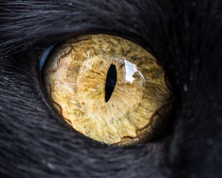 Гипнотизирующие макроснимки кошачьих глаз